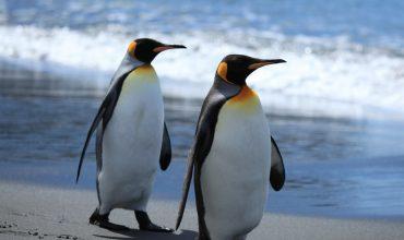 Aktualizacja Pingwin 3.0.