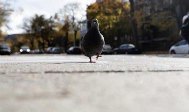 Nowy update Google, czyli Pigeon