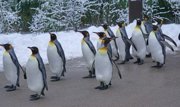 Pingwin 3.0 – skutki i wnioski
