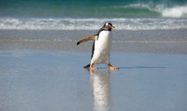 Aktualizacja algorytmu Google – Pingwin 2.0